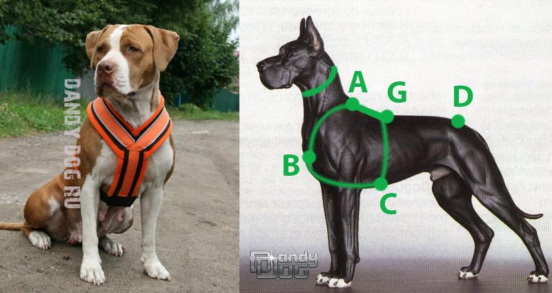 прогулочная шлейка для собаки