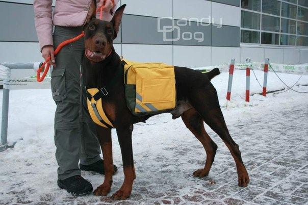 Походный рюкзак для собак купить рюкзак herlitz в германии